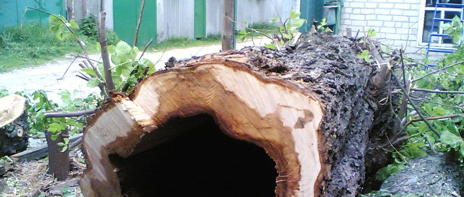 -КГМ-спиленные-деревья